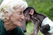 """Seit 50 Jahren widmet die """"Baboon Lady"""" ihr Leben der Rettung und erfolgreichen Auswilderung verwaister Paviane."""