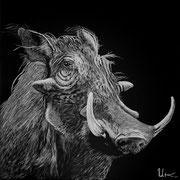 Pumba, 30x30cm