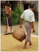 Secando el arroz a la entrada del palafito. © Daniel Roca García.