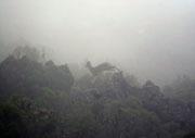 Antilope saltando en la niebla. © Juan Carlos Ascaso.
