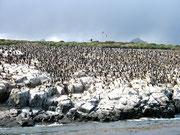 Isla de los pájaros. © Leonardo Ara Pueyo.