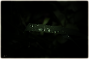 Tropfenfunkeln im Dunkeln