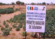 Jardin maraîcher des femmes de Souma/Kounari