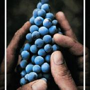 La gourmandise du vin