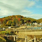 野尻湖畔は紅葉で有名なんです。