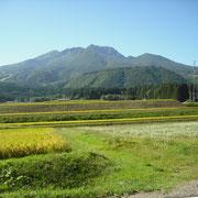 稲と蕎麦がコラボしています。