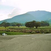 黒姫山の麓にあるコスモス園です。