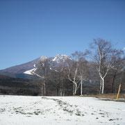 白樺越しの妙高山。