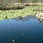 いもり池に映る妙高山です。