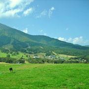 黒姫山をバックのコスモス園。