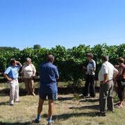 Les vignes du Domaine Pautier - EARL de La Romède - Pineau des Charentes et jus de raisin pétillant