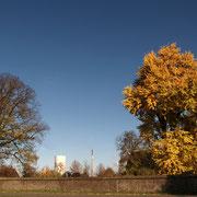 Ginkgo im Herbstaspekt, linke Seite Winterlinde ebenfalls Naturdenkmal  HRB 2, Foto H.Kuhlen, Aufnahme-Datum 08.11.2008
