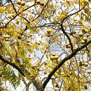 Herbstlaub und Fruchtbehang