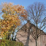 Habitus im Spät-Herbst, Winterlinde (rechts) bereits völlig entlaubt, Silberlinde (links) im goldfarbenen Herbstlaub, F.Kuhlen, Aufnahme-Datum 01.11.2015
