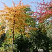 Habitus im Herbstaspekt