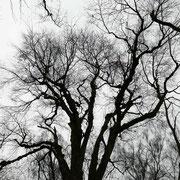 Kronenbild im Winteraspekt, Foto: H.Kuhlen, Aufnahme-Datum Winter 2016