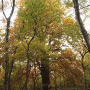 Habitus im Herbstaspekt, Foto H.Kuhlen, Aufnahme-Datum Herbst 2015