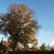 Habitus im Herbstaspekt,Foto H.Kuhlen, Aufnahmedatum 24.10.2013