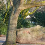 Findling, im Vordergrund Walnussbaum, Foto H.Kuhlen, Aufnahme-Datum 13.02.2016