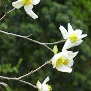 Blüten in Nahaufnahme, 4.04.2019
