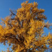 Herbstaspekt, Foto H.Kuhlen, Aufnahme-Datum 22.11.2014