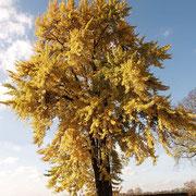 Herbstaspekt, Foto H.Kuhlen, Aufnahme-Datum 08.11.2008