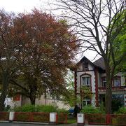 Habitus mit Haus der Buche, Foto H.Kuhlen, Aufnahme-Datum 26.04.2008