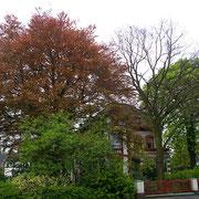 Gesamtansicht mit Haus der Buche, Foto H.Kuhlen, Aufnahme-Datum 26.04.2008