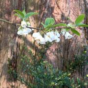 Blütenzweig, 13.05.2021