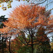 Krone im Herbstaspekt, das Farbenspektrum ist überwältigend