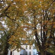 Rosskastanien, Standort Biergarten, Foto Heinz Kuhlen, Aufnahme-Datum: 22. 10. 2013