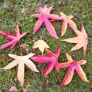Farbenvielfalt von Herbstlaub, Foto HK.; Aufnahme-Datum: 26.10.2017