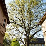 Kronenblick, Foto H.Kuhlen, Aufnahme-Datum H.Kuhlen 01.05.2008