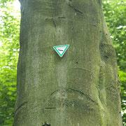 Stammabschnitt mit dem Denkmalschild, Foto H.Kuhlen, Aufnahme-Datum 23.05.2008