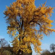 Herbstaspekt. Foto H.Kuhlen, Aufnahme-Datum 22.11.2014