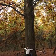 Stamm mit Vergleichsperson, Foto H.Kuhlen, Aufnahme-Datum Herbst 2015