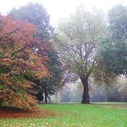 Habitus im Herbstaspekt, Foto H.Kuhlen, Aufnahme-Datum n.b.