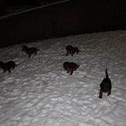 Wie lieben Schnee