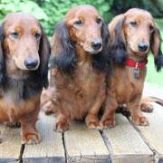 August 2014, Mama Piccoline hatte Besuch von Ihren beiden Söhnen Zeppelin und Zar