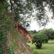 Ich muss unbedingt zu den Eichhörnchen vordringen....