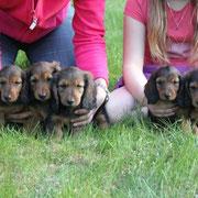 von links: Zoe, Zsa-Zsa, Zeppelin, Zissy und Zar