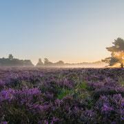 Natuurgebied Den Treek, Leusden