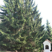 """Hier stand das Forsthaus """"Kapellen"""" bzw. ganz früher die Waldkapelle."""
