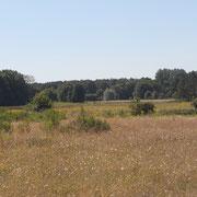 Sand-Magerrasen im Bereich Nord Pöhlen, ein Trockenhang in der Emsaue, eine vom NABU-Naturschutzstation Münsterland betreute Fläche