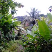 Regenwald von Dominica