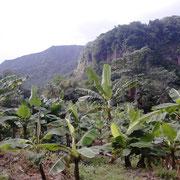 Reegnwald von Dominica