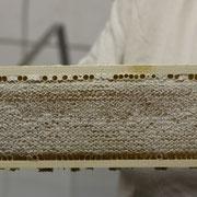 sauberer Honig nur aus sauberen Wachs, Ernte 2013