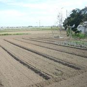 今回の特徴は畑へのEM散布でした