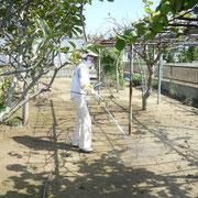 センターのある下野郷下地区54戸でEMを散布しました。
