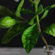 Gardenie aus Wafer Paper | Foralilie